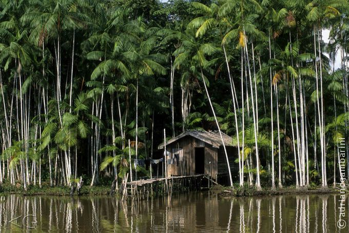 casa de palafita - Amazonas -Pesquisa Google