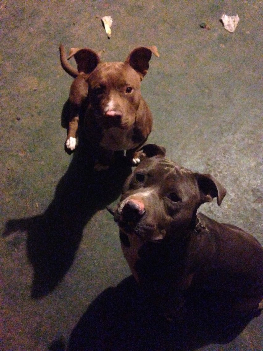 My boys Capone and Ace