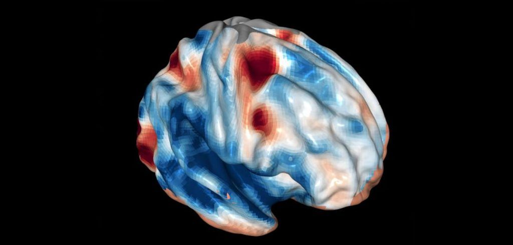 Caffeine and its analogues revert memory deficits by normalizing stress responses in the brain | PsyPost