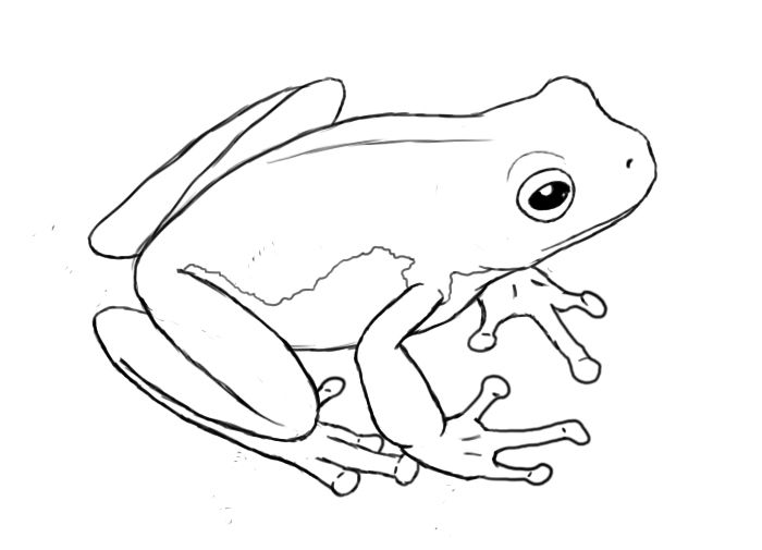 Frog drawing how to draw a frog