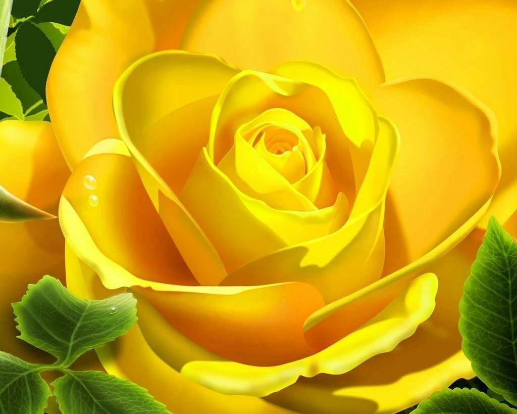 Peaches Barbi On Yellow Roses Yellow Flower Wallpaper Beautiful Roses