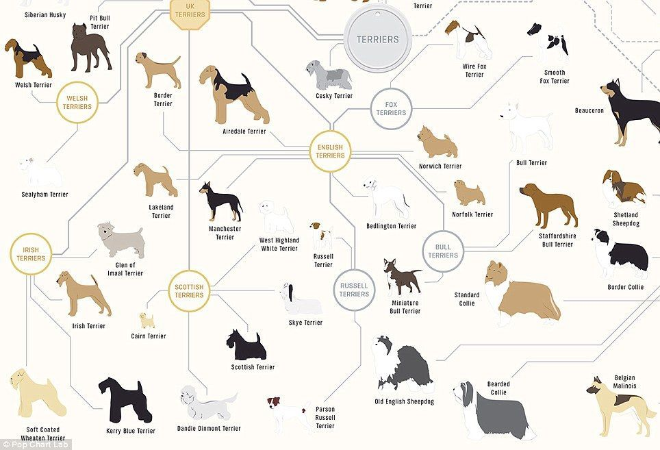 The Chart Features 181 Dog Breeds From Tiny Toy Animals Like The