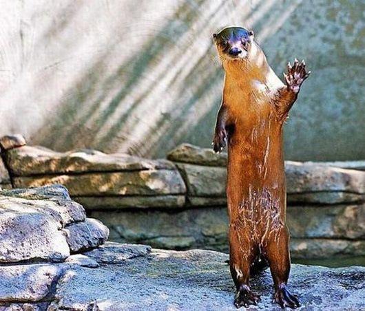 saluda9 18 Animales Encantadores Que Te Saludan