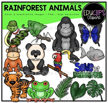Rainforest Animals Clip Art Bundle Educlips Clipart Rainforest Animals Art Bundle Red Eyed Tree Frog