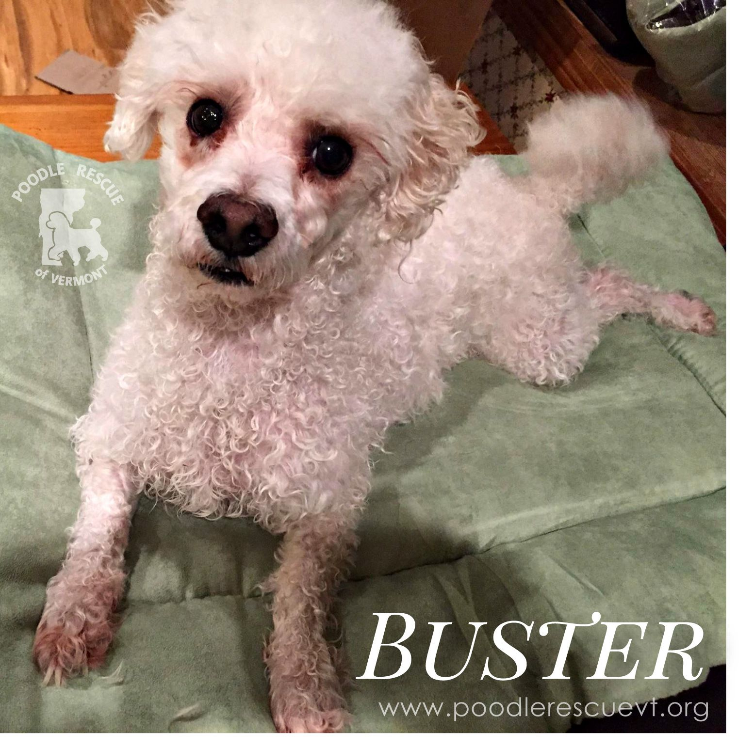 Buster Is Looking For His Forever Home Check Out Our Website At