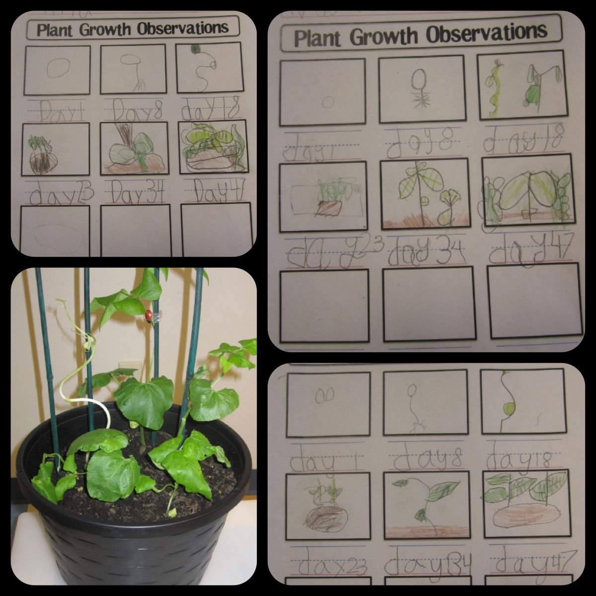 Worksheet Wednesday Plant Growth Observations