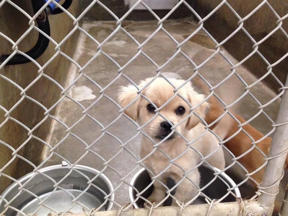 15+ Los angeles animal control images