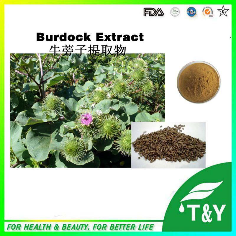 Hot sale!Superior Quality Relax Muscle Great Burdock Fruit Extract 10:1 1000g/lot