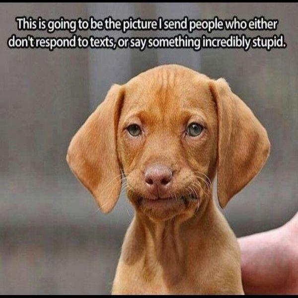 Funny Dog Face Meme Happy Meme Happy Memes Pinterest Funny