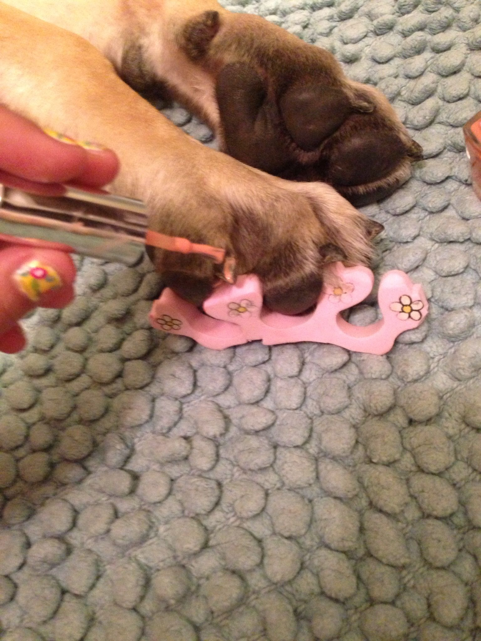 Can I Paint My Dog's Nails : paint, dog's, nails, Painting, Nails!