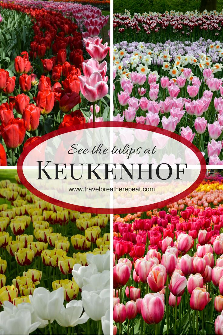 ff422115d9dddd34705b9c57acdad00b - How To Get To Keukenhof Gardens