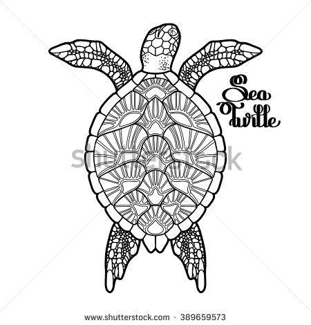 Graphic Hawksbill sea turtle drawn in line art style