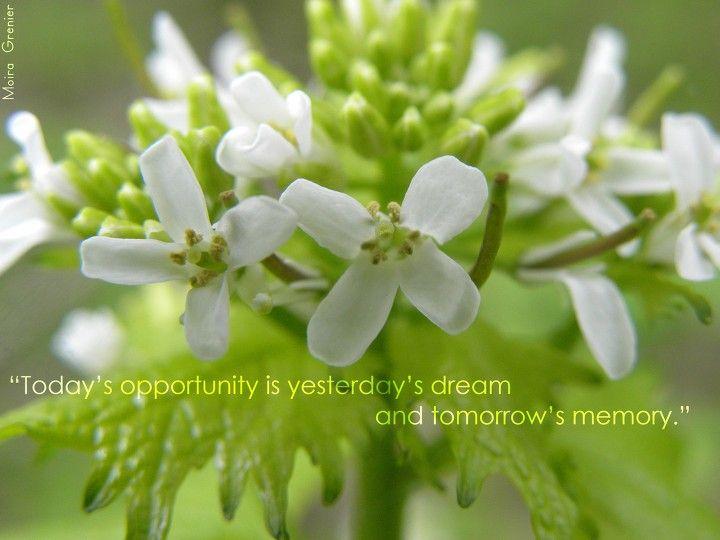 todaysopportunity