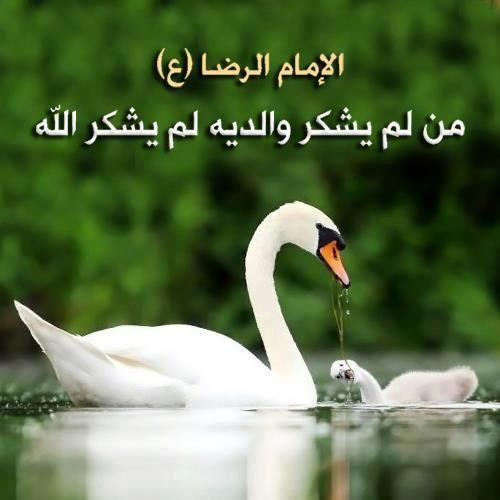 شكر الله من شكر الوالدين Proverbs Quotes Hadith Proverbs