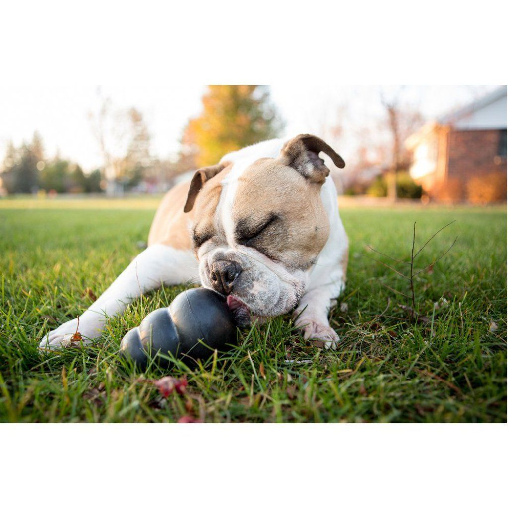Kong Extreme Dog Toy Best Offer Dog Toys Outdoor Dog Toys