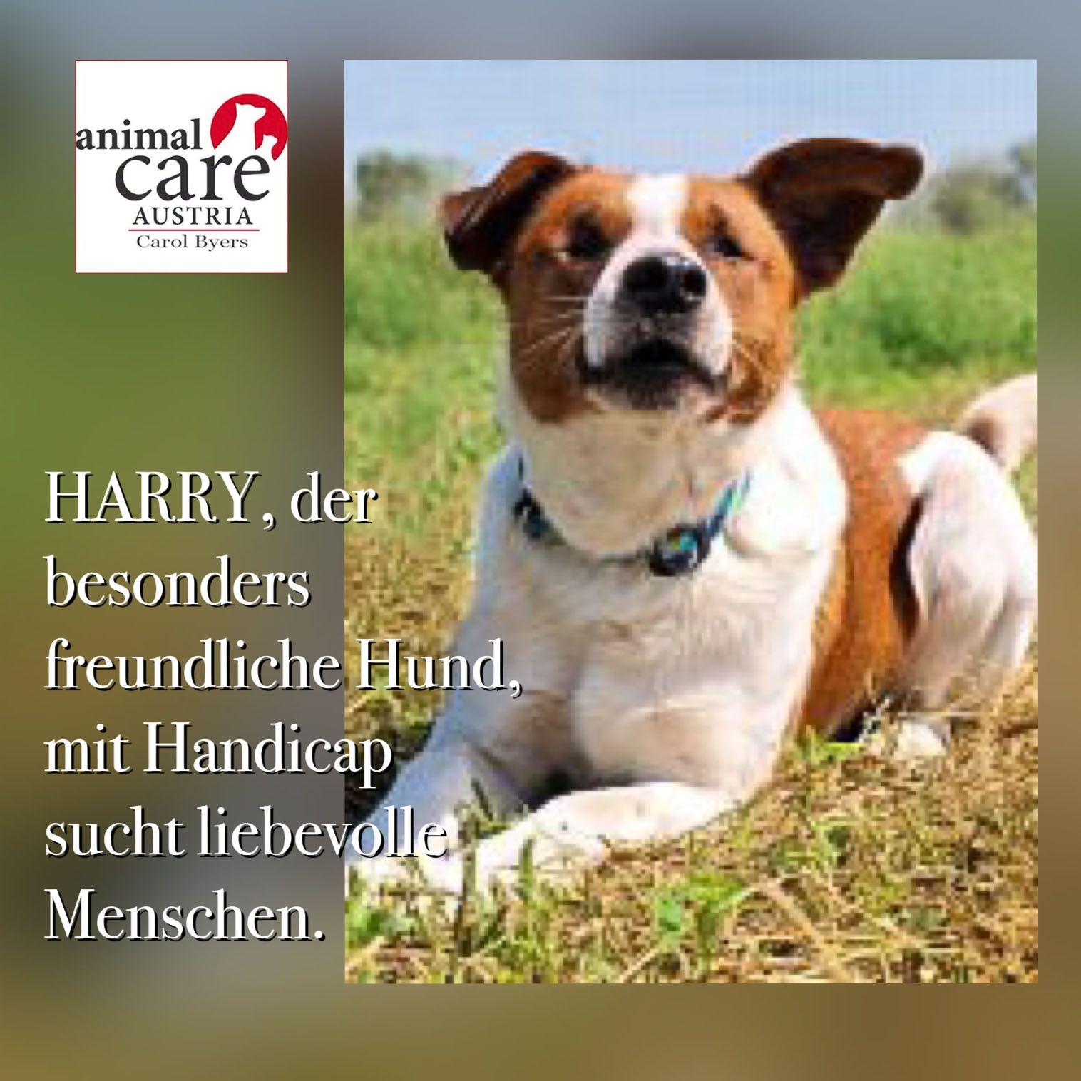 Harry ist ein besonders freundlicher lieber und anhänglicher hund
