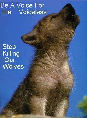 Be a Voice for the Voiceless--Stop Killing Our Wolves