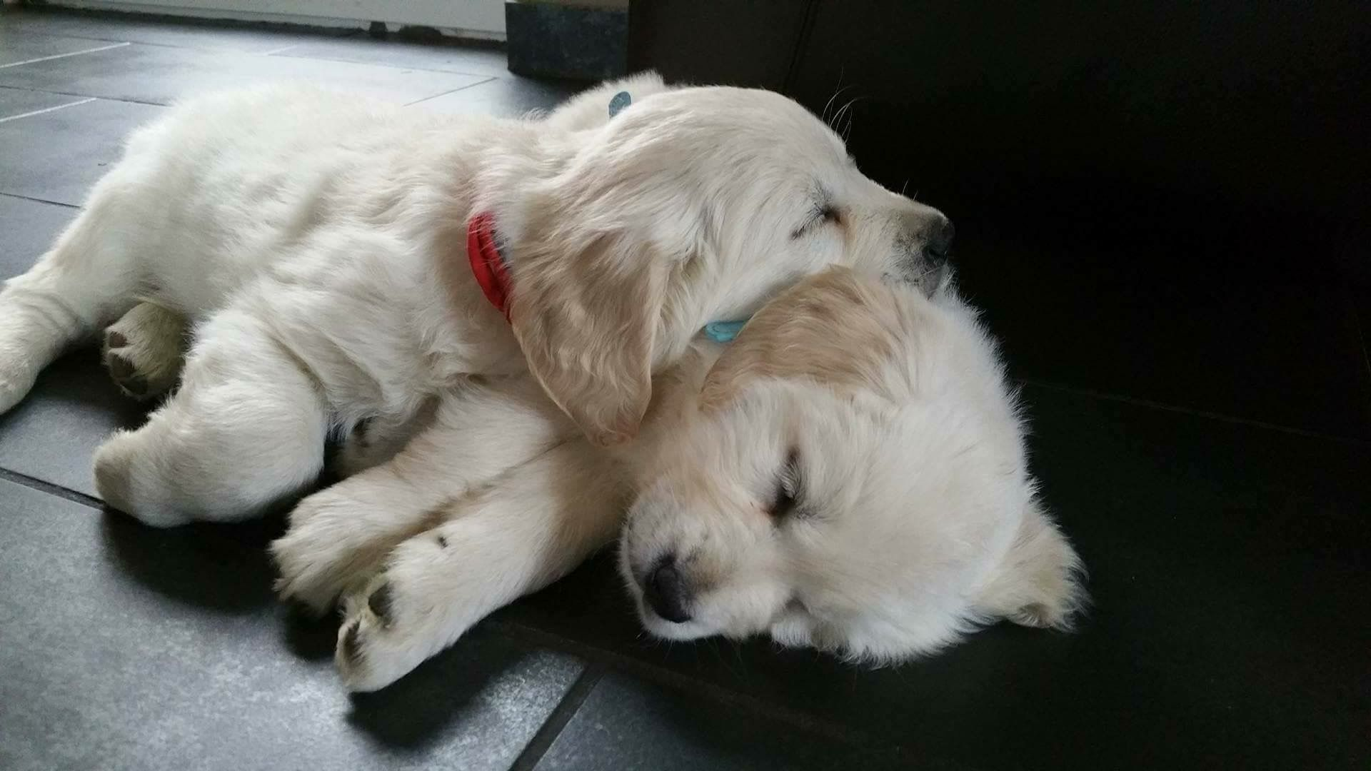 Missing Cute Dogs Puppies Cute Animals