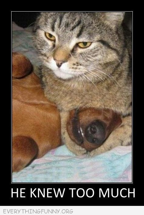 Funny Meme Caption Ideas : Funny caption pictures cat covering dogs mouth he knew too