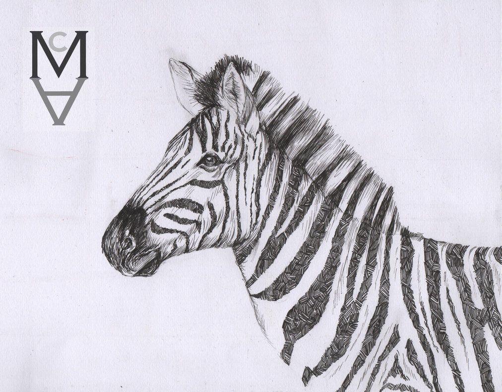 Zebra drawn in black fine liner / cross hatch / pen ...