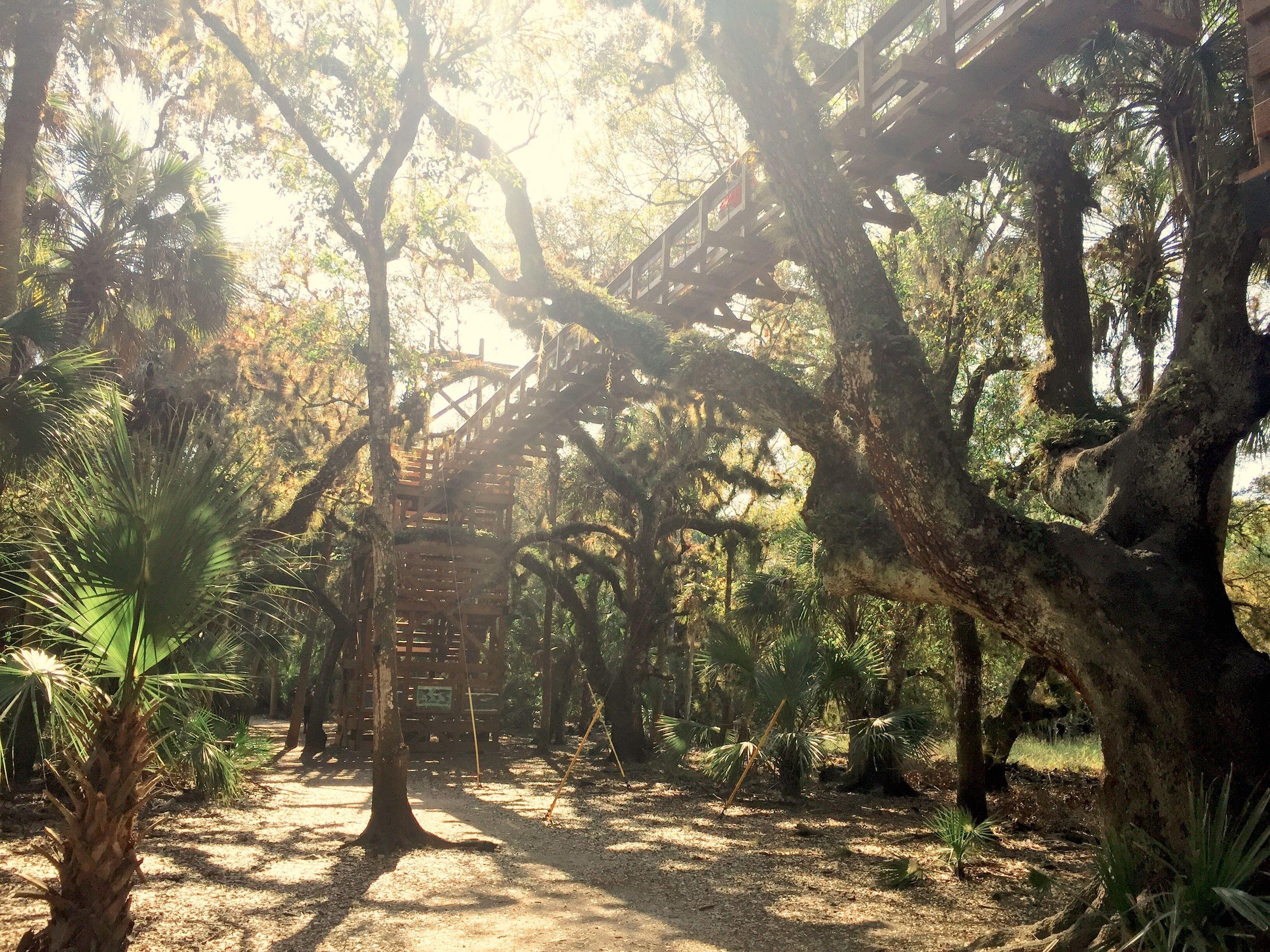 Myakka River State Park | Sarasota Florida | Tumblr | Outdoors | Canopy & Myakka River State Park | Sarasota Florida | Tumblr | Outdoors ...