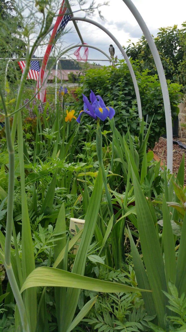 Pin by Dorothy Murray- Foust on Garden ideas we will do | Pinterest ...