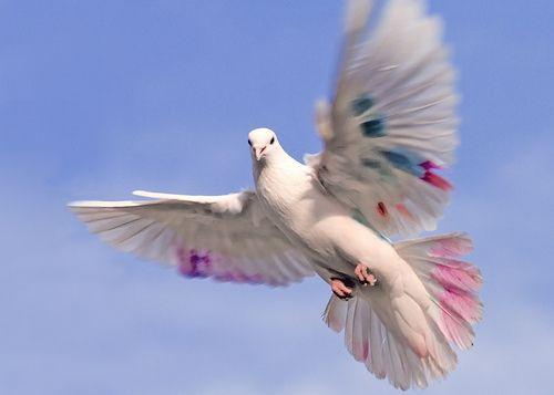 20 Shots That Captured Birds In The Wild Perfectly Flying Birds Images Birds Flying Birds
