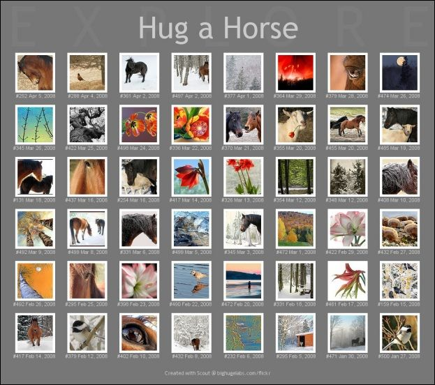 Anne Louise MacDonald, author, and Hug a Horse Farm: Wonderful photos from a talented artist and horse lover's life