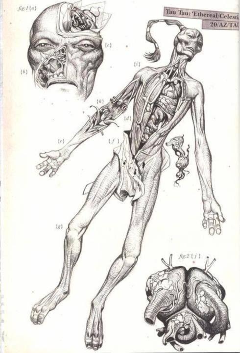 Tau anatomy | Warhammer 40k | Pinterest | Warhammer 40K, Warhammer ...
