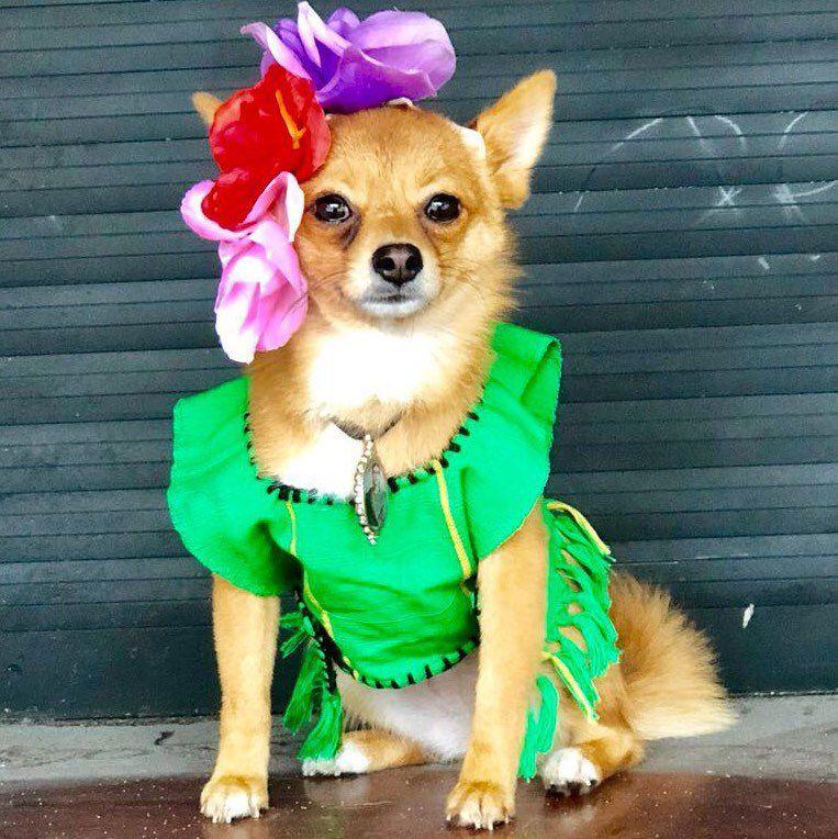 Mexican Dog Dress Frida Dog Costume Frida Kahlo Dog Dress