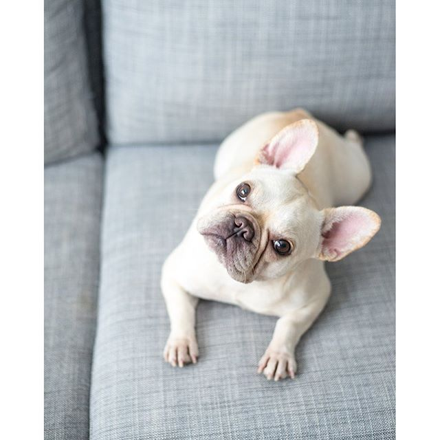 Pardon I Only Speak Frenchie Funny French Bulldog
