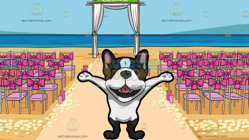 french bulldog puppies palm beach