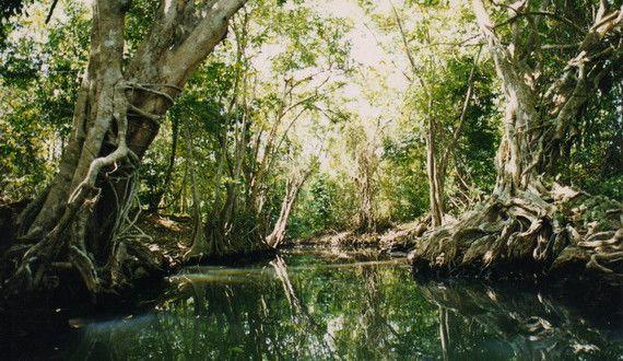Morne Trois Piton National Park, Dominican Republic tropical forest