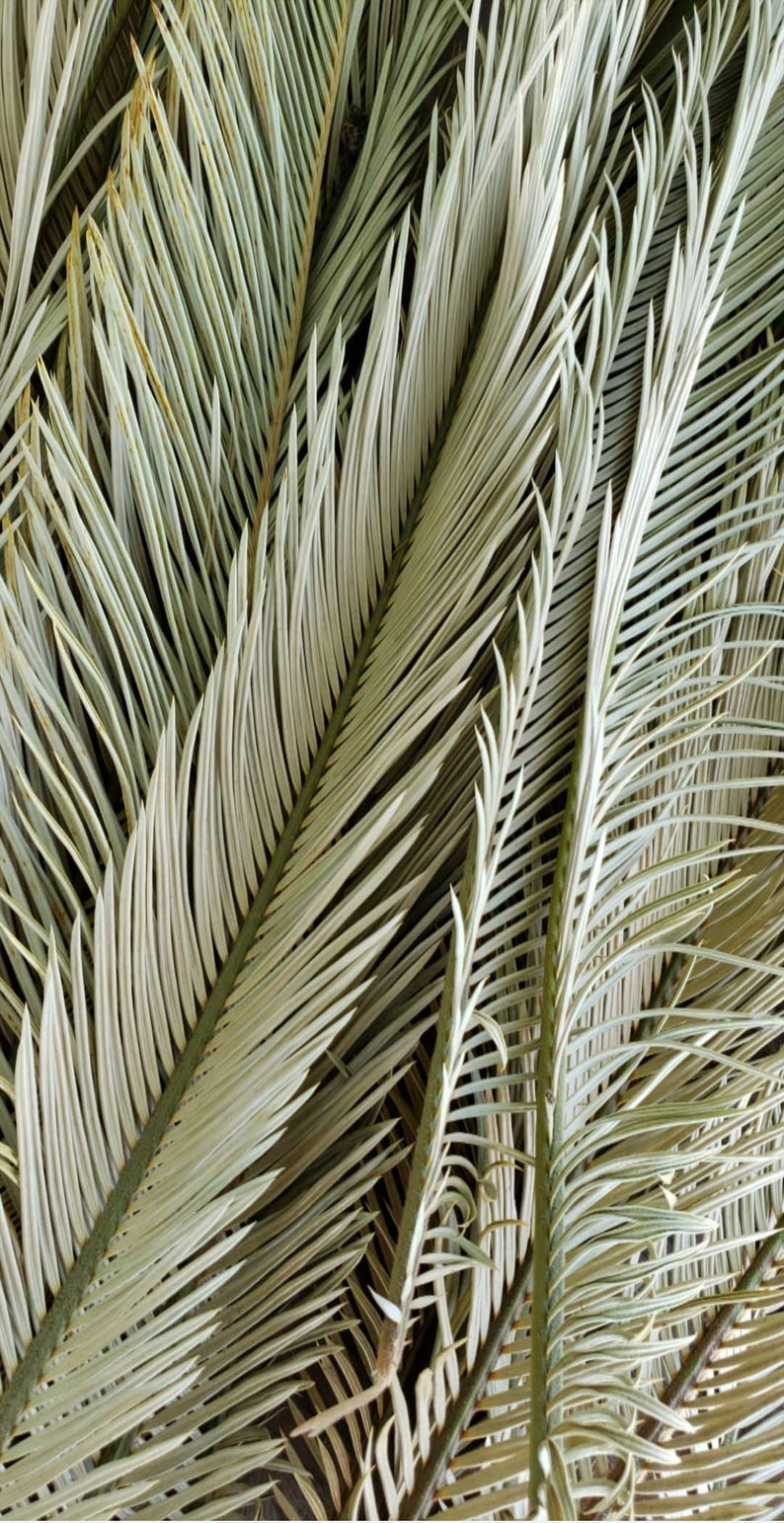 Dried Palm Fronds Dried Sago Palms Dried Palm Leaves Etsy In 2020 Desert Decor Nature Decor Green Aesthetic