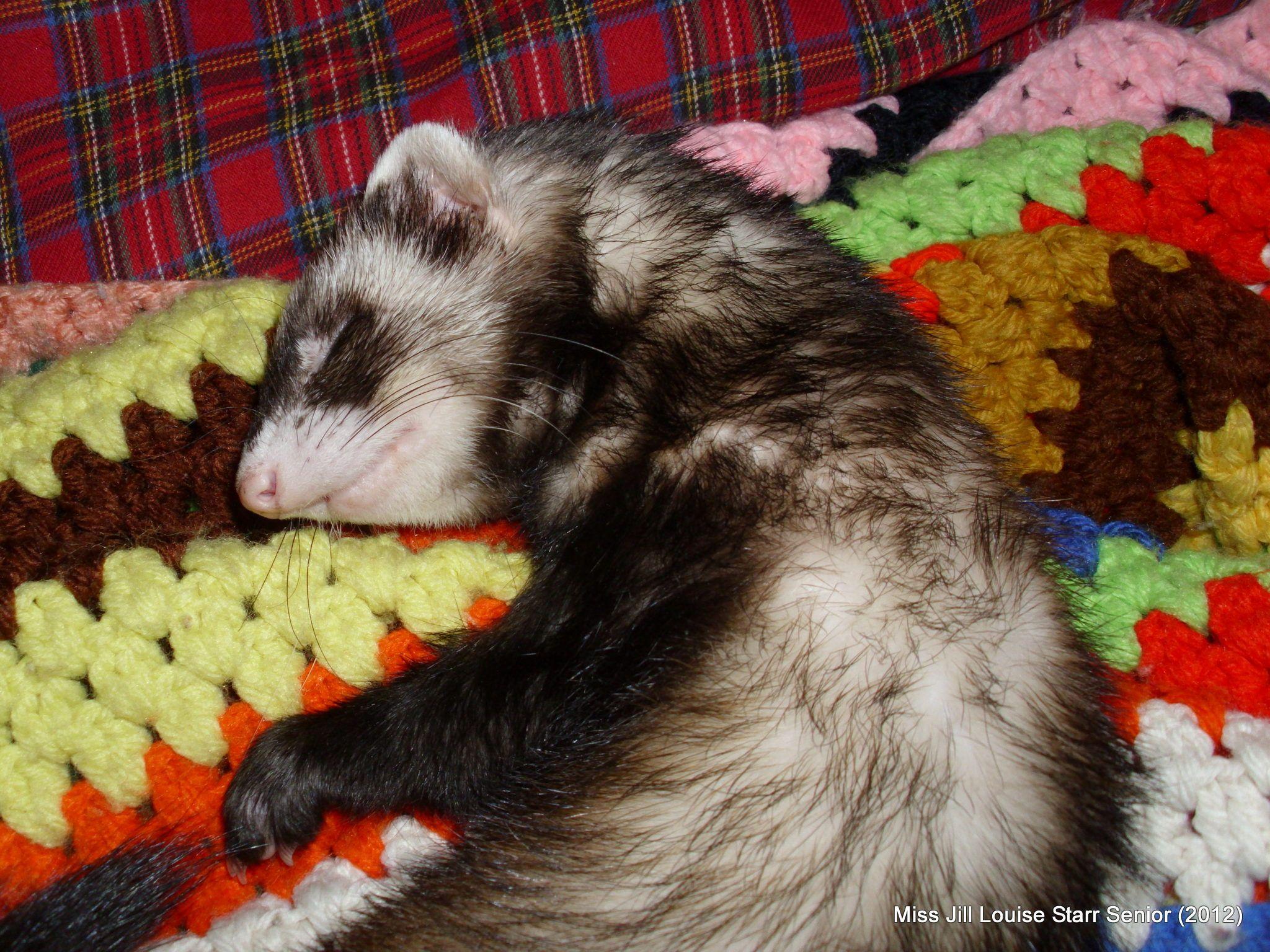 my ferret