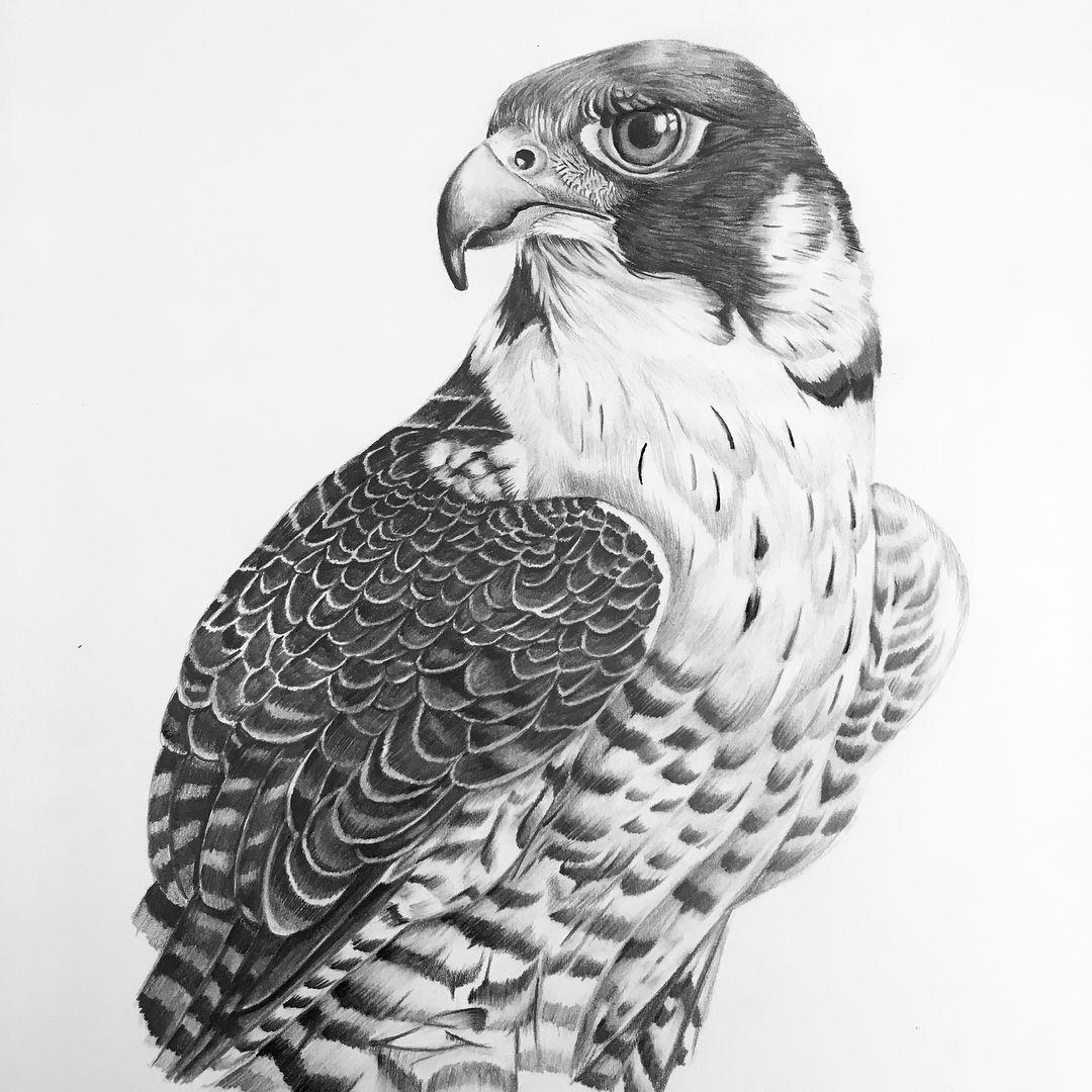 картинки диких птиц простым карандашом