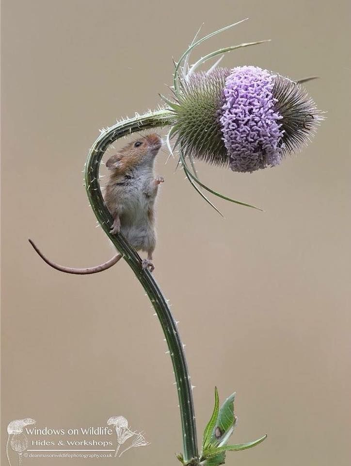 Stop to smell the flowers. #wondersofnature