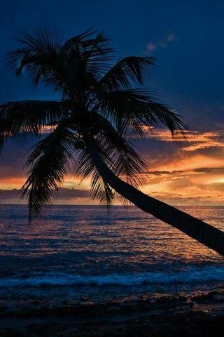 Palm Beach Wallpaper