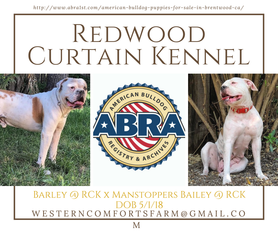 American Bulldog Puppies For Sale Abra American Bulldog Registry Archives American Bulldog Puppies American Bulldog Bulldog Puppies
