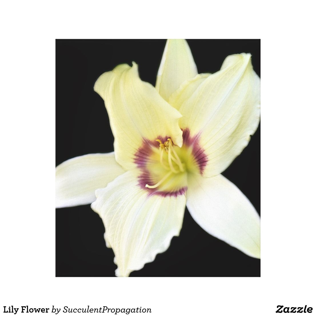 Lily Flower canvas Wall art   Home Canvas Wall Art   Pinterest ...