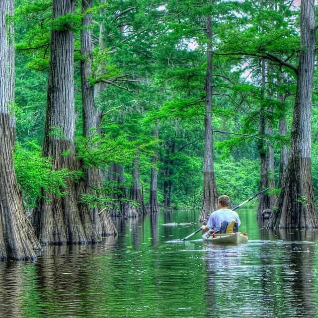 """""""You may have heard of the Bayou in @louisianatravel on TV or in films, but have you seen it up close? This incredibly diverse swamp ecosystem is home to…"""""""