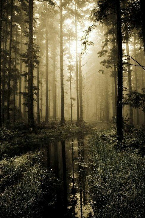 The Hideaway Forest Photography Beautiful Nature Landscape Photography