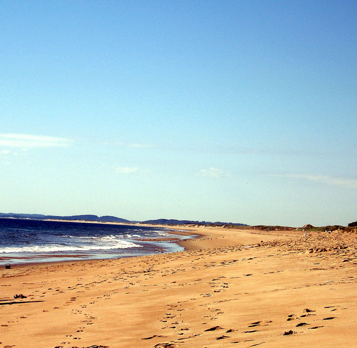 Plum Island Beach: Plum Island, Newburyport, MA We Hunt For Sand Dollars Here
