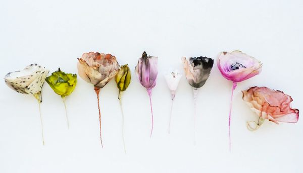 Anthology Magazine | Artists | Paper Flowers by Lyndie Dourthe