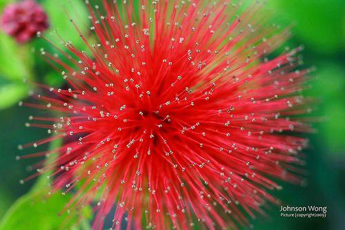 Firework Flower Fireworks Colorful Flowers Flowers