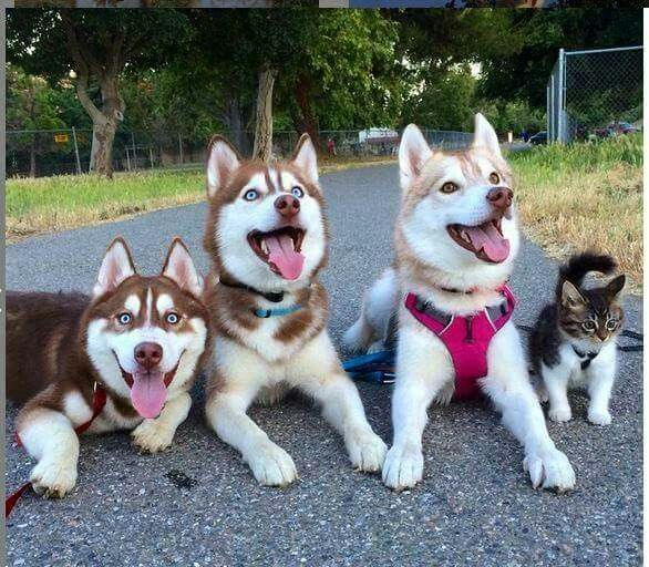 I M One Of The Crew Woo Woo Kitten Rescue Cute Animals Dogs