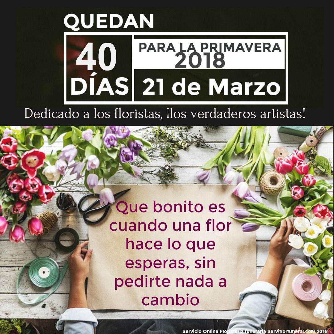 Tipos De Rosas Rojas En El Mundo Frases Primavera Flores Pinterest