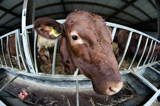 Failed Animal Welfare Widespread in Food Industry, Cites New Report
