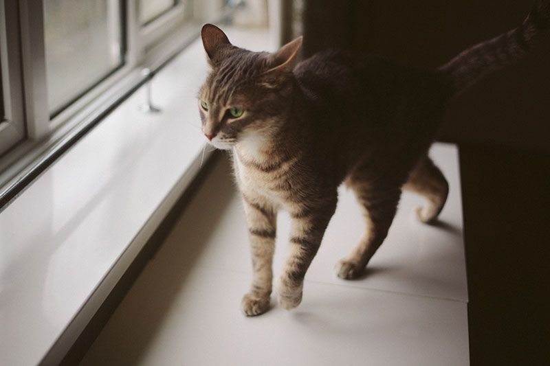 Pet Insurance For Cats My Readers Share Their Experiences Pet Insurance Cost Cat Illnesses Cat Training