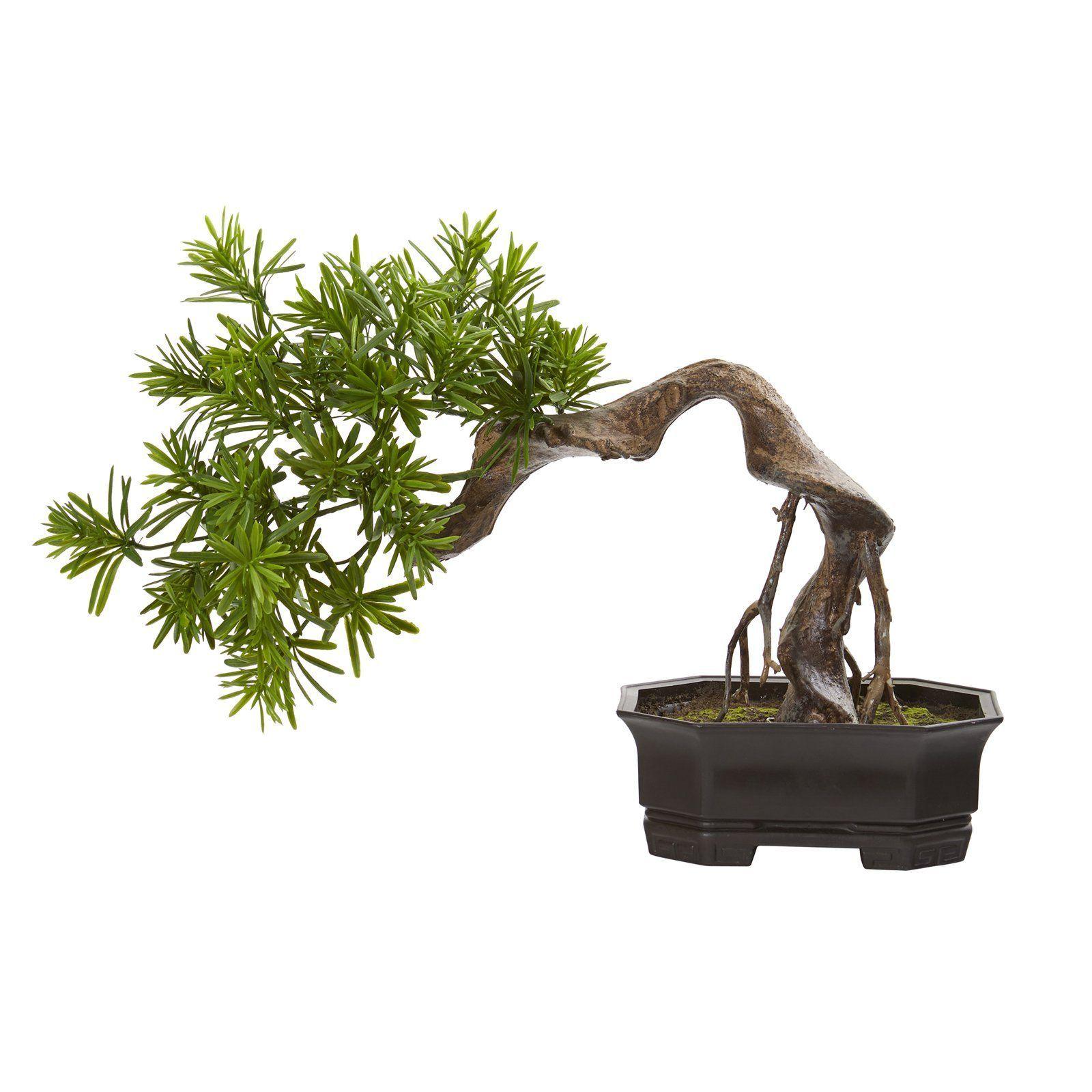 Artificial Bonsai Cerca Viva Podocarpos Natural Nearly Plant Podocarpus Styled Nearly Natural 20 In Bonsai Styles Podocarpus Bonsai Artificial Plants